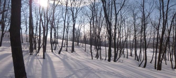 Лыжная пробежка в Новосемейкино